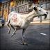 羊 模擬器 . 超級 狂 連連看 山羊 競賽 模擬 遊戲 免費